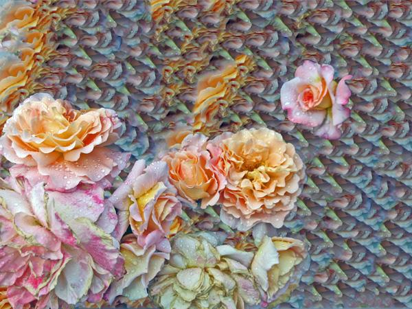 Elisabeth Rass, FEDERKLEID, Series WALTZ OF ROSES, digital phhotography