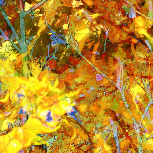 A.Verdier-Fourmond, Firebirds-08, digital painting, 50 x 50 cm
