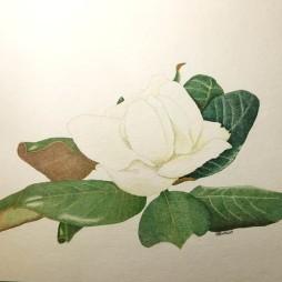 Werner Otto Egelhofer, [0109] Magnolia grandiflora, 2019, Darstellung: B 340 x H 185 mm auf HAHNEMÜHLE Britannia matt, 300 g, B 400 x H 300 mm, Pointillismus mit Tusche, Aquarellfarbe und Farbstift